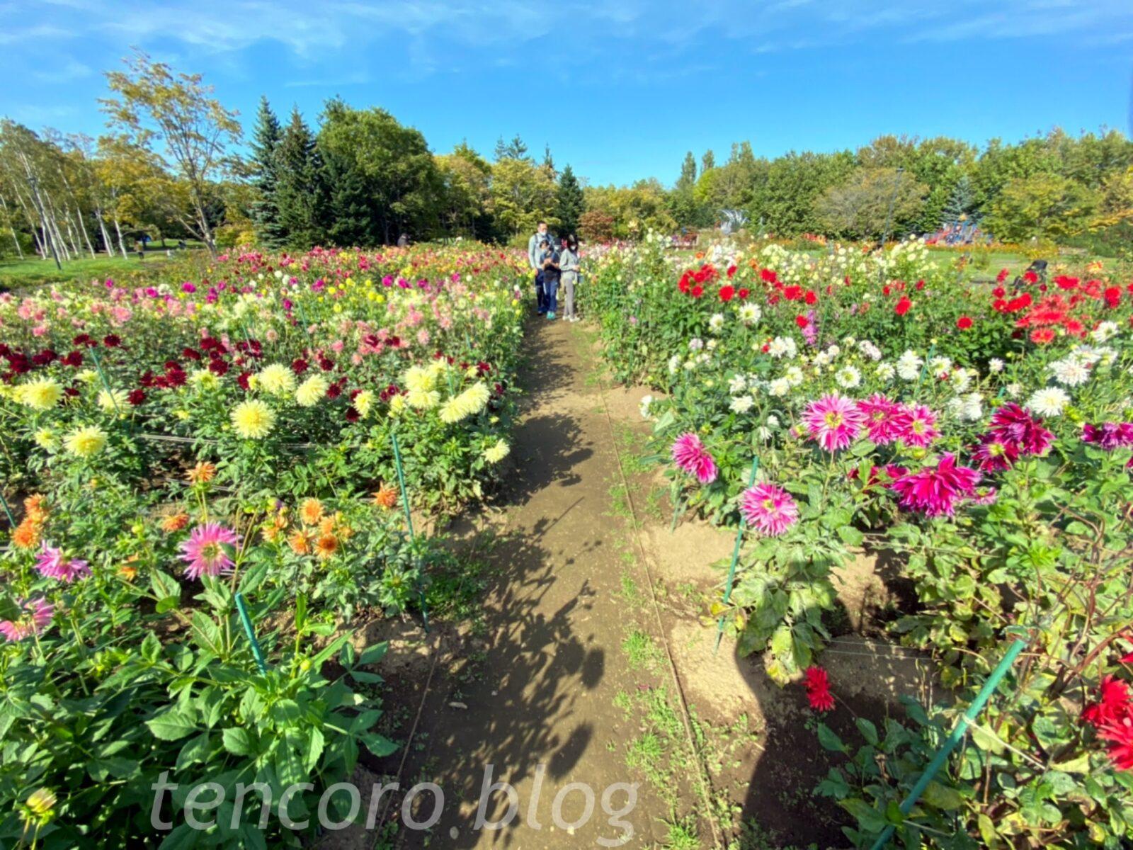 札幌 公園 百合が原 大型 花畑